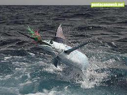 Pesca  con Caña 2013